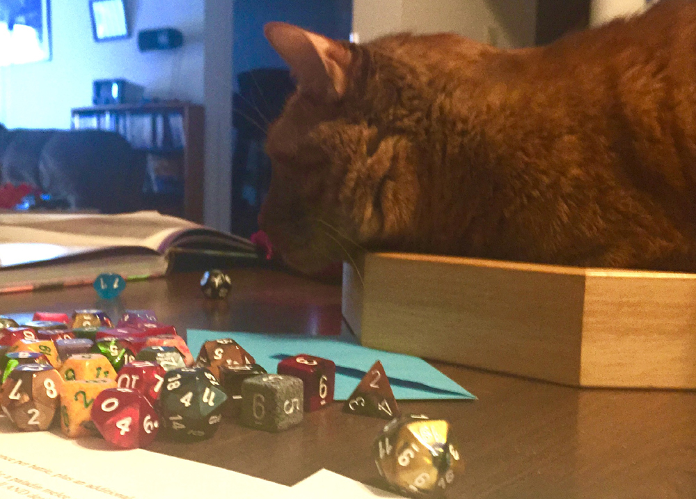 Evinrude considers the dice. © Kaylee Jung. Photo used with permission.